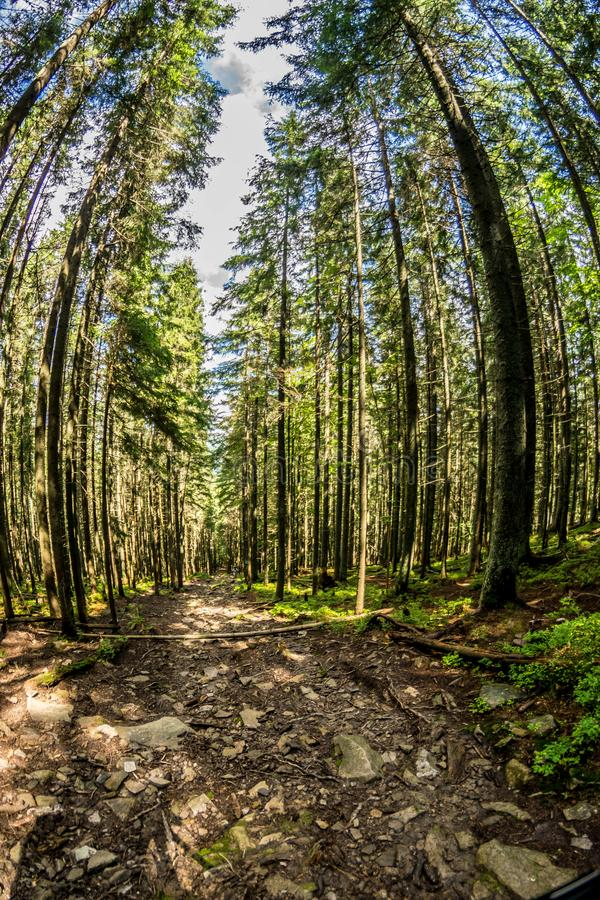 A path in a dense forest through a fisheye lens stock image
