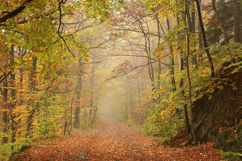 Path through early autumn forest in misty weather royalty free stock photo