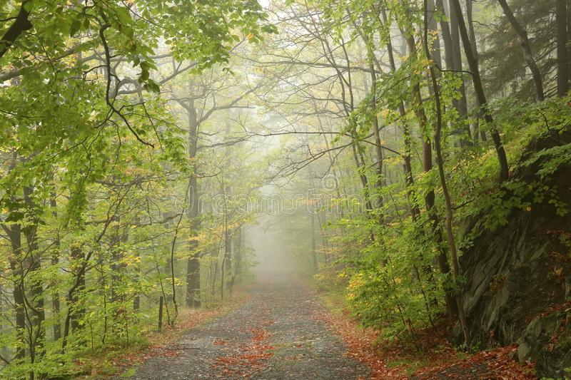Path through early autumn forest in misty weather royalty free stock images