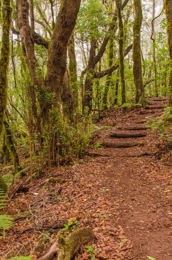 Path in El Cedro, laurel forest in La Gomera. Path in El Cedro, laurel forest(Garajonay National Park) in La Gomera, Canary islands, Spain stock images