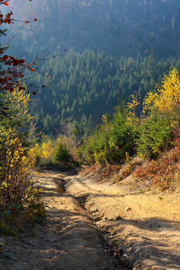 Path in evergreen forest, Carpathian Mountains, Ukraine. Travel, ecotourism stock images