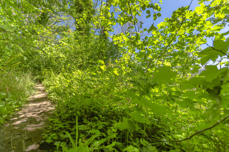 A path in the fairy green forest State Park Campground, Washington, USA. Hiking and traveling views near Mount Rainier in Washington over the summer royalty free stock photos