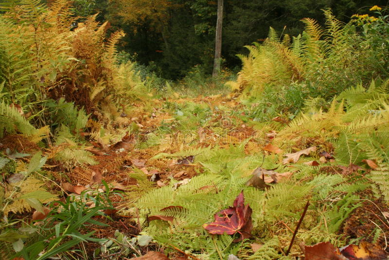 Path through fall ferns stock photos