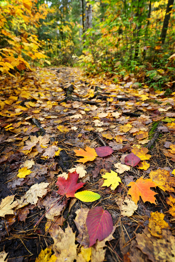 Download Path in fall forest stock image. Image of color, park - 21747813