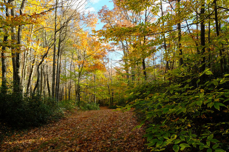 Download Path Through Fall Forest Stock Photo - Image: 83713966