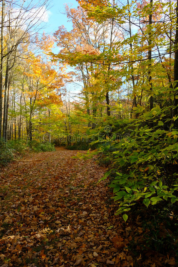 Download Path Through Fall Forest stock photo. Image of carpeting - 83715144
