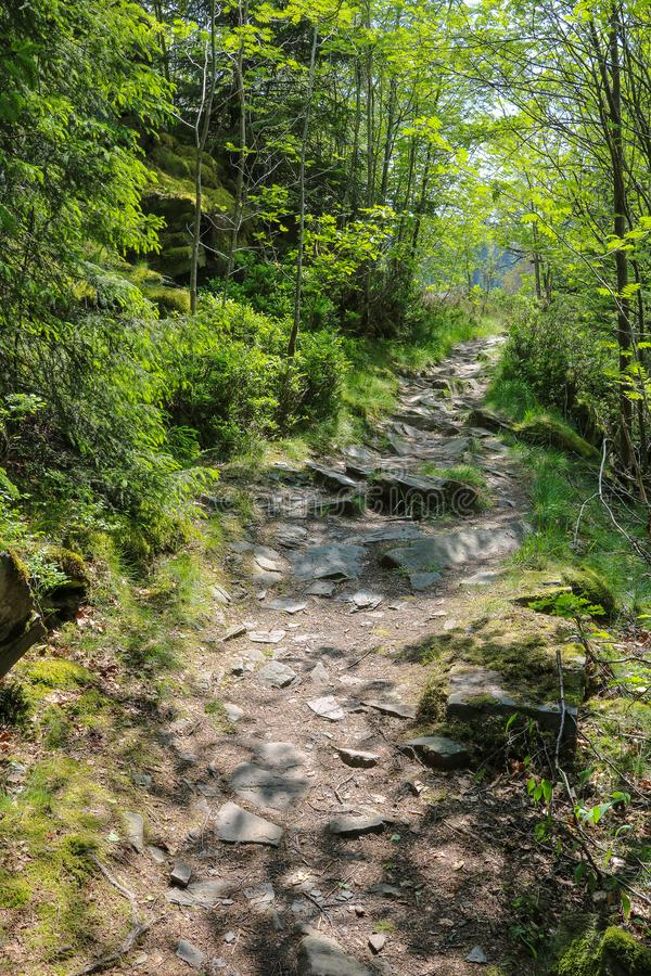 Path on the famous hiking trail Eifelsteig, part of the western german uplands. Green trees and moss blossoming beside the way at royalty free stock images