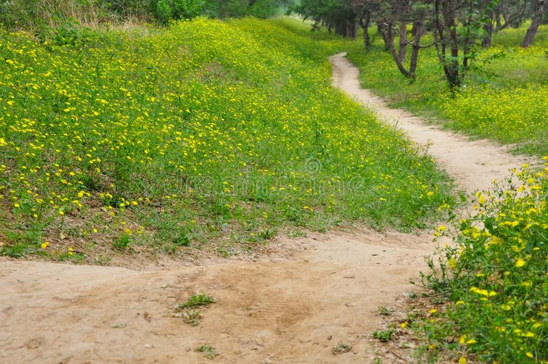A path in the field with Flowers on both sides royalty free stock photo