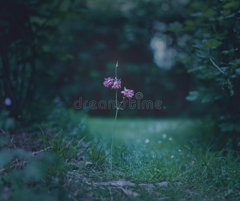 Path flower stock images