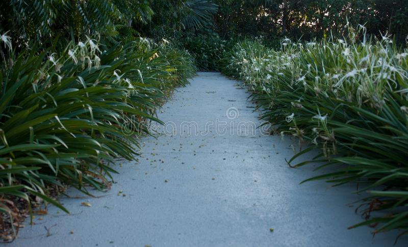 A path with flowers on each side in a park in Queensland, Australia royalty free stock photo
