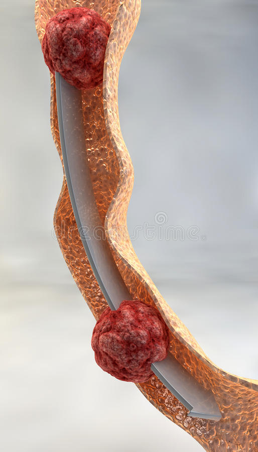 Path of food, digestion, bolus, intestine royalty free illustration