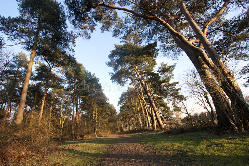 Download Path through the forest stock image. Image of dawn, green - 13130727