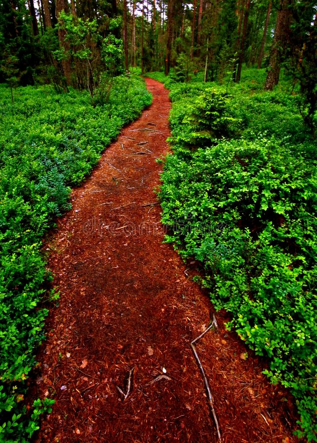Download Path into the forest stock photo. Image of trek, national - 7310224
