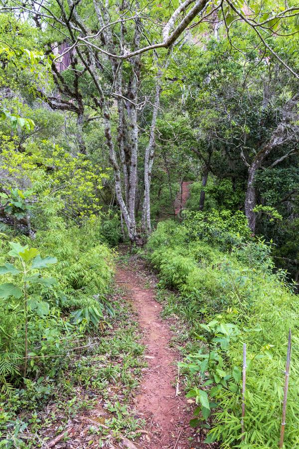 Path in forest at Amboro park. Path in forest at Aamboro park, Bolivia royalty free stock photography
