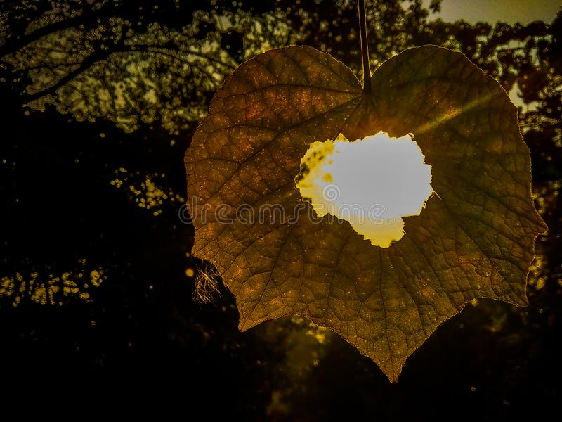A path view from the hole of a hanging leaf stock photo