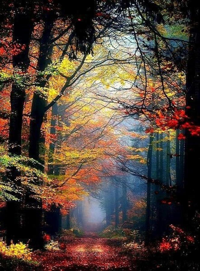 Path through forest in autumn royalty free stock image