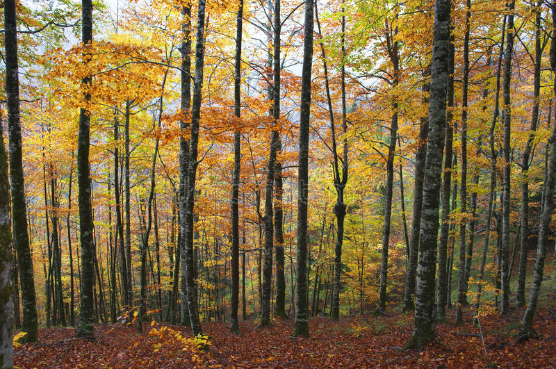 Download Path In The Forest With Autumn Leaves Stock Image - Image: 26605461