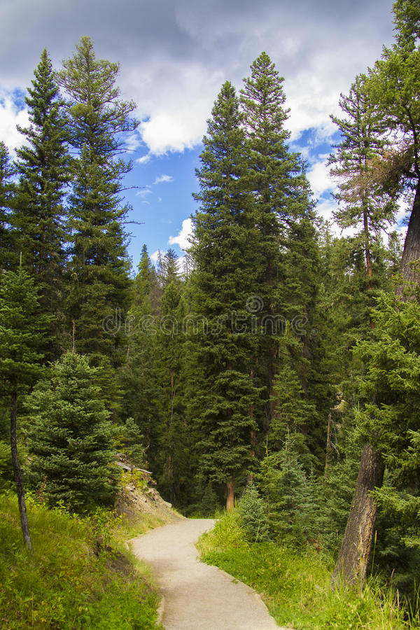 Path through forest in Big Sky. Scenic view of pathway receding through forest in Big Sky, Montana, U.S.A stock photos