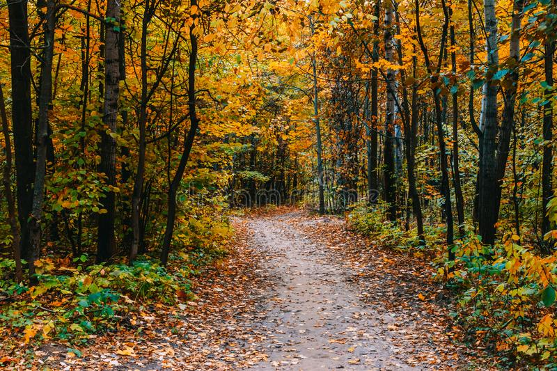 Path in a forest with colorful autumn leaves stock photos