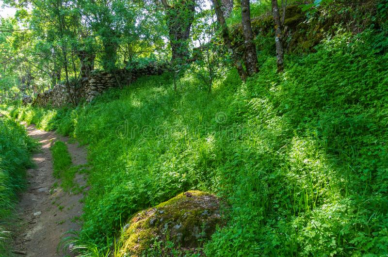A path between the forest and the grass in spring stock photo
