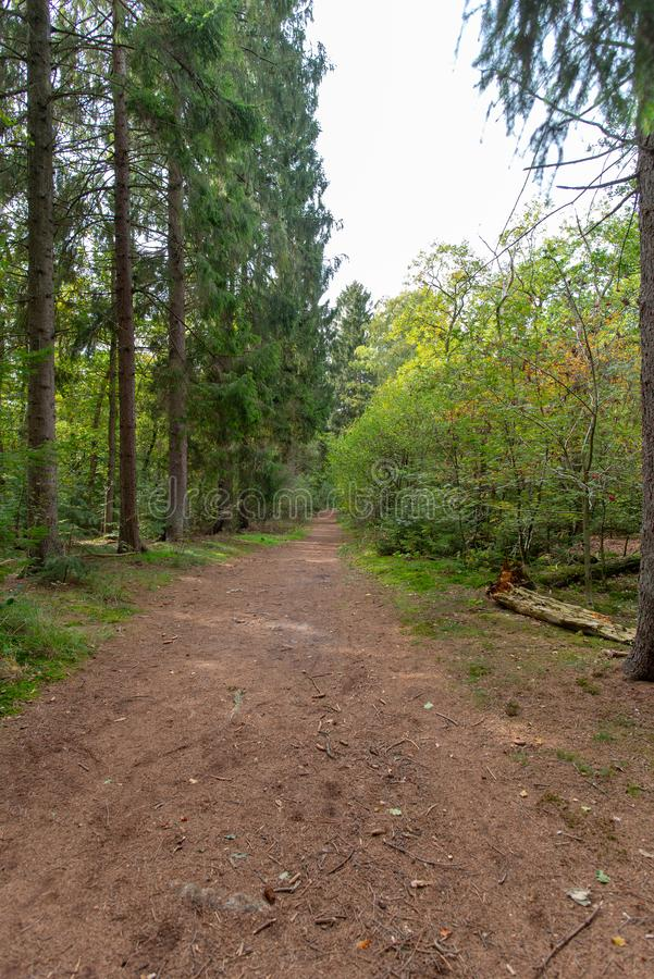 Path in the forest, Holland. Path in the forest. Hoge Vuursche, Holland. During autumn. Some pine trees, white sky stock image