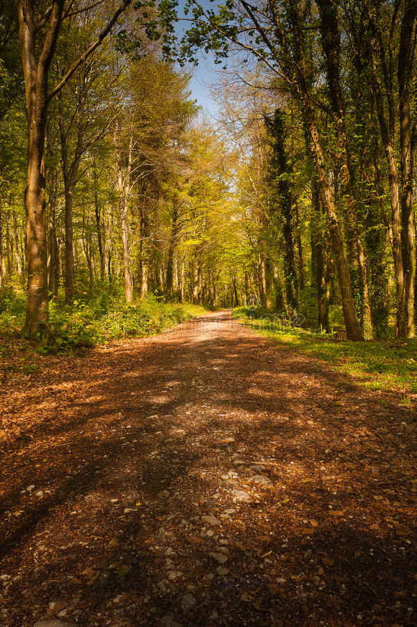 Download Path in forest, Ireland stock photo. Image of eire, trees - 18502508