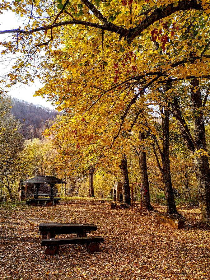 Nature park Grza near the Paracin, Serbia. Path through forest by the lake. Nature park Grza near the Paracin, Serbia. River surrounded with forest. Autumn stock photos