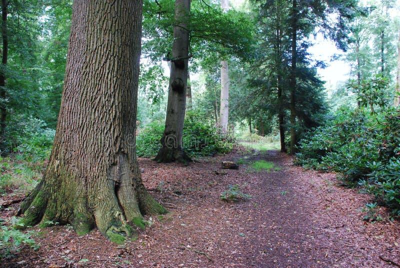 Path Through Forest Free Public Domain Cc0 Image