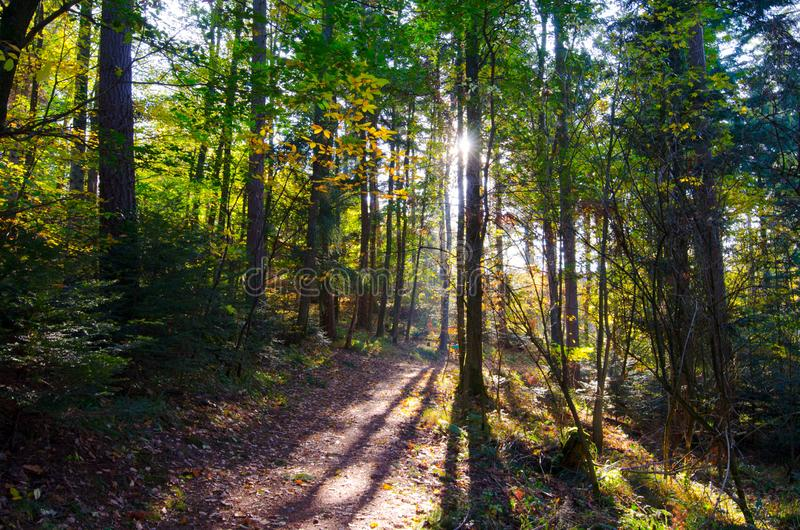 Path in the forest of the vosges mountains royalty free stock photo
