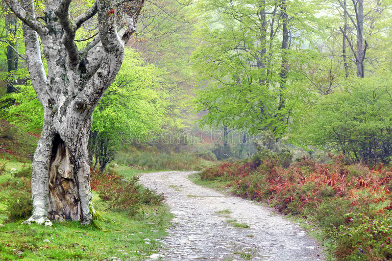 Path in the forest in spring royalty free stock photos