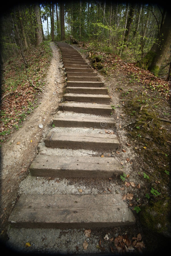 Download Path in forest with steps stock photo. Image of footpath - 9069274