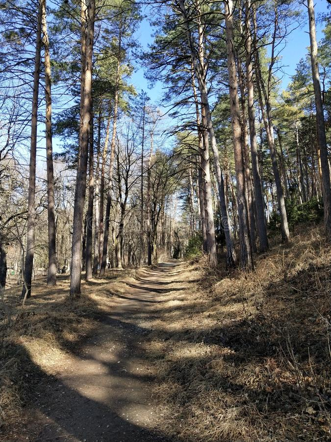 Path in the forest. In sunny day stock photos