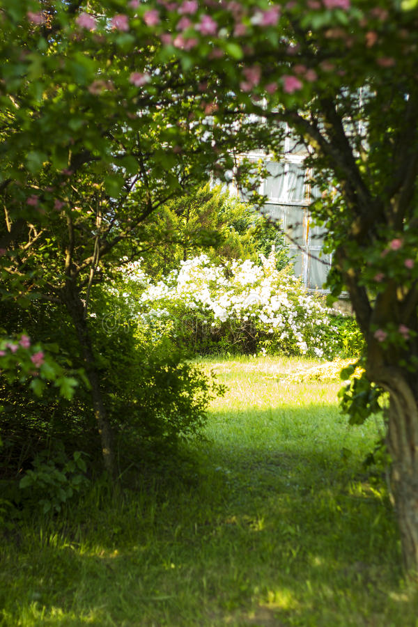 Path in the forest among the trees. Door to the secret garden stock photos
