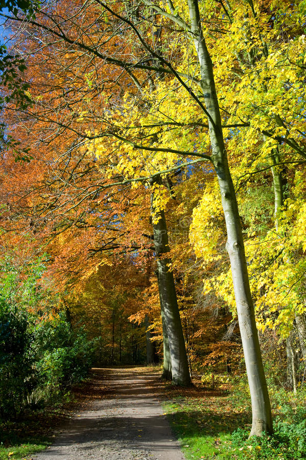 Download Path Through Forest With Vibrant Autumn Colors Stock Photo - Image: 33387880