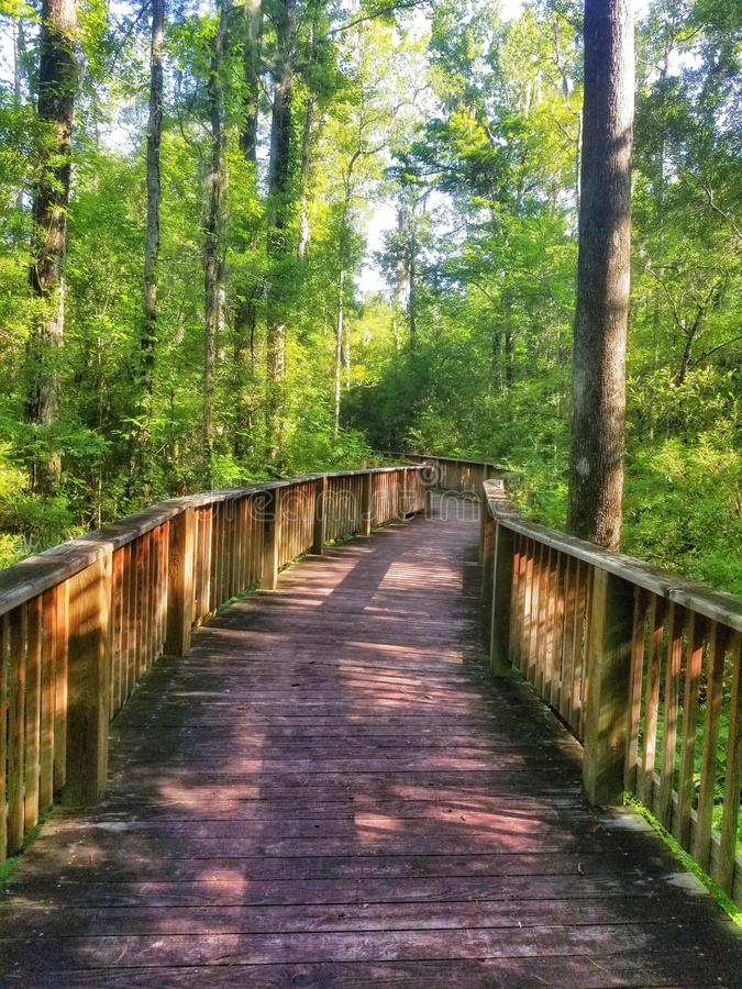 Path through the forest. royalty free stock photos