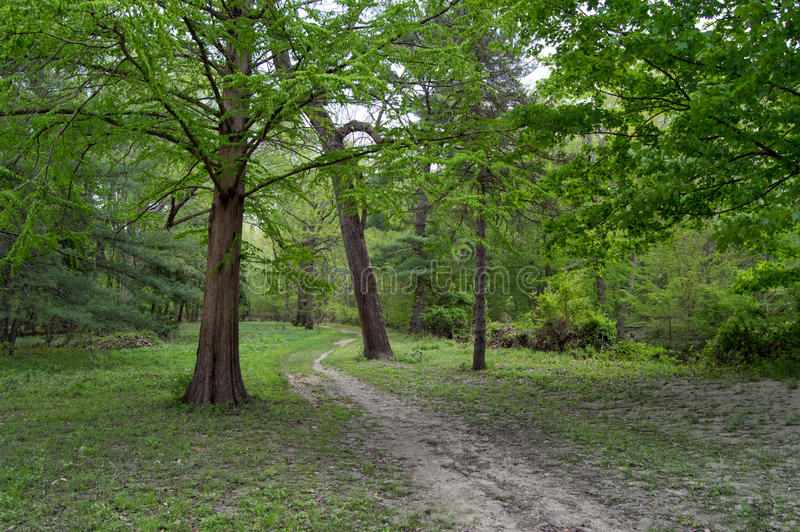 Path through the forest royalty free stock photography