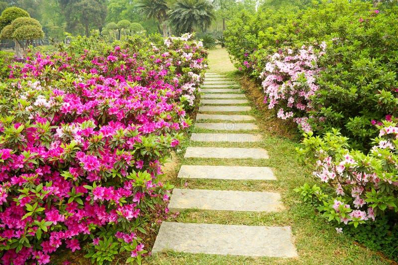 A path full of azaleas royalty free stock photos