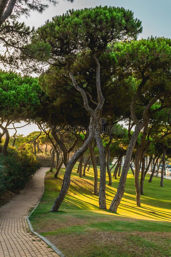 A path full of trees in the way to the beach in Punta Umbria, Huelva,Spain royalty free stock image