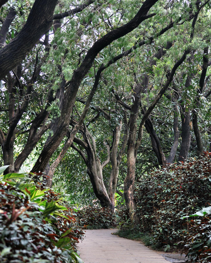 Download Path In Garden Covered With Trees Stock Photography - Image: 19983502
