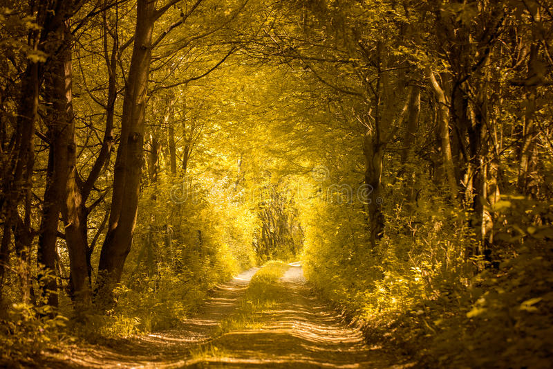 Path in golden forest royalty free stock photography