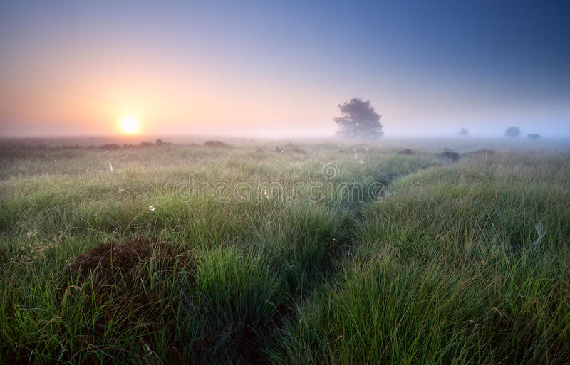 Path through grass in misty sunrise stock images