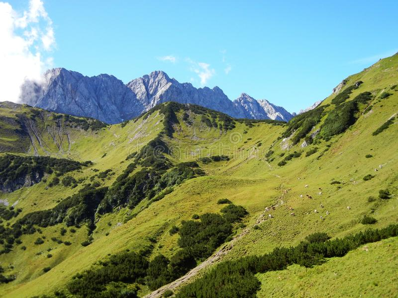 Path in grass mountains, cows and pointy rocks royalty free stock images