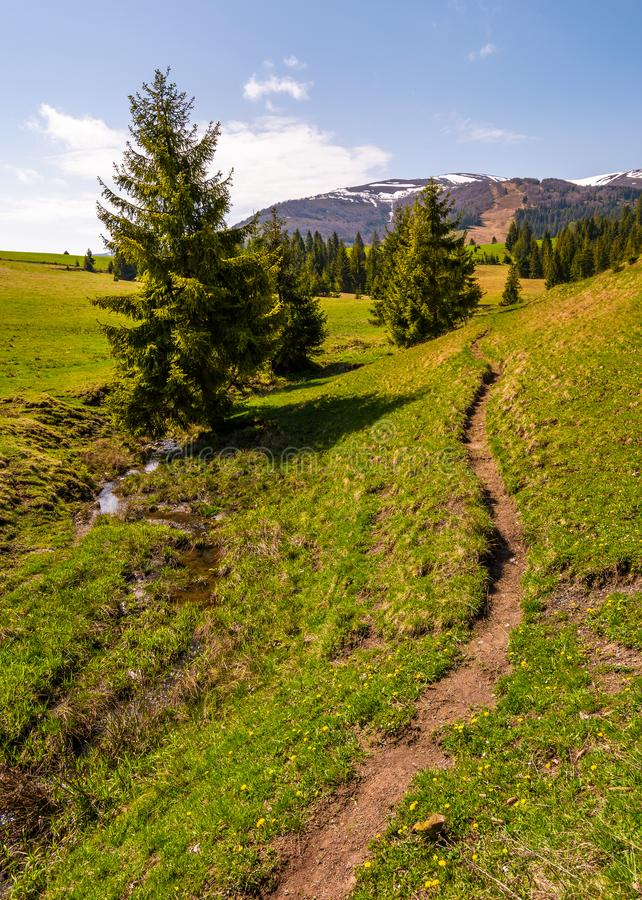 Path through grassy slope in to the forest stock photos