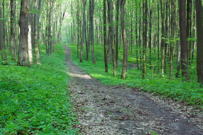 Path In The Green Forest Royalty Free Stock Images