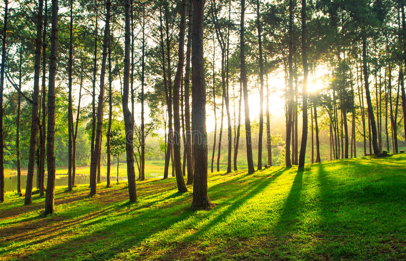 A path is in the green forest. A path in the green forest royalty free stock photo