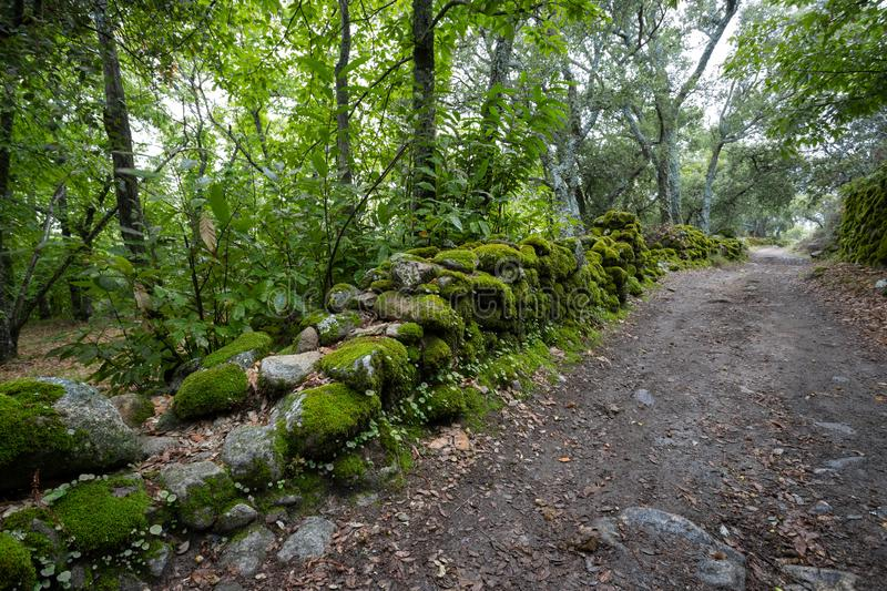 Path in the green forest. Chestnut forest of Montanchez, Caceres, Extremadura, Spain.  royalty free stock photos