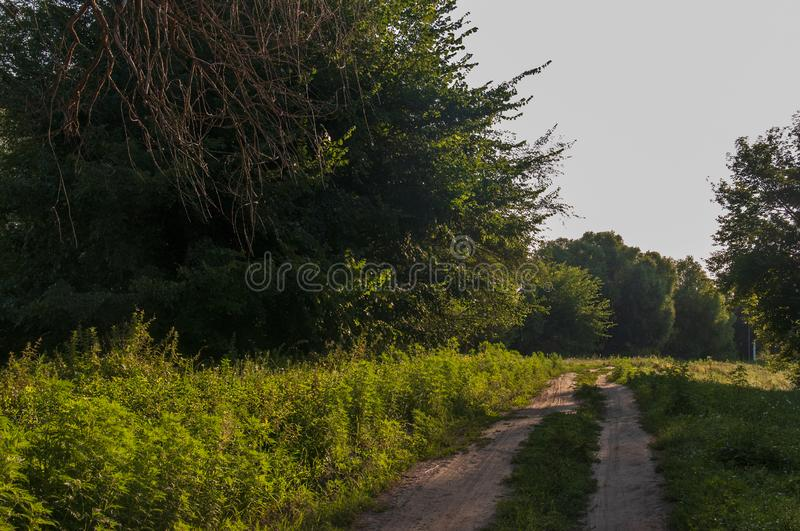 Path through green forest and little river near. Places for walk on the fresh air in summer.  royalty free stock photo