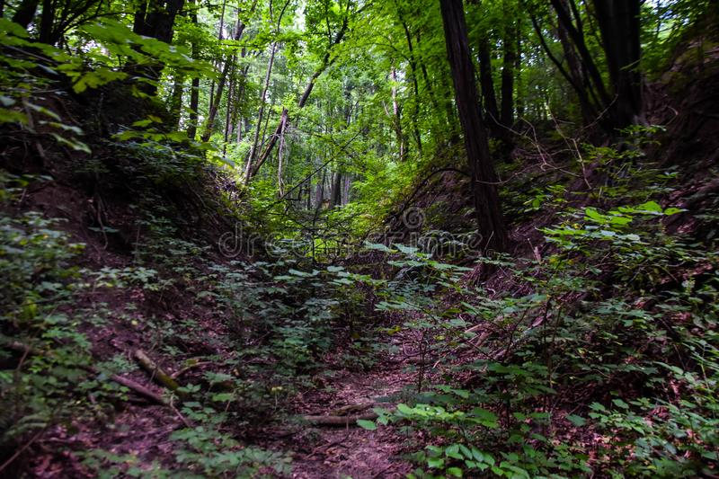 Path through the green forest. natural background.  royalty free stock photos