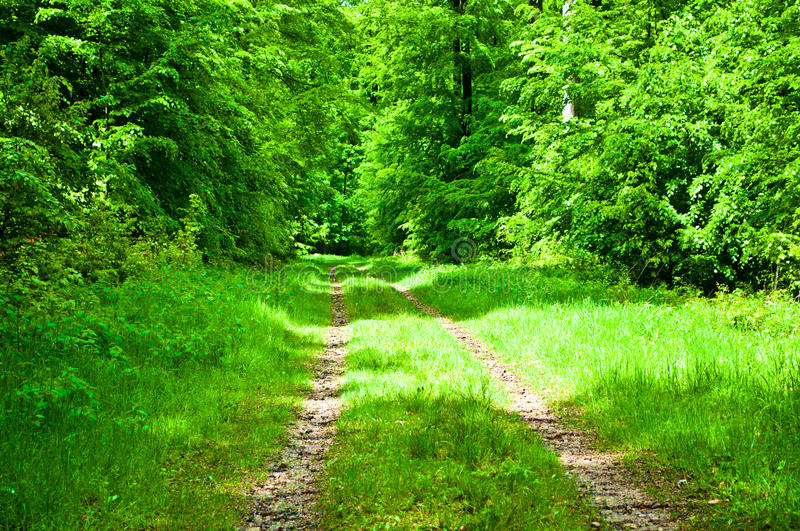 Download Path in a green forest stock image. Image of texture - 30988447