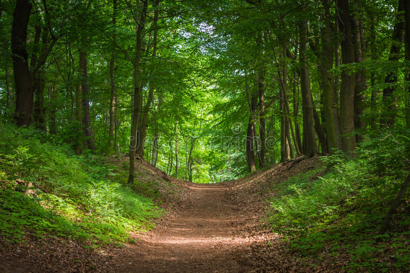 Path in the green forest in the sunlight.  stock photo